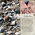 Seashellcollectorssmall