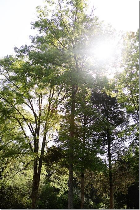 trees_blog