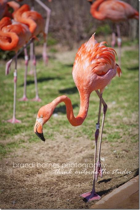 2011-03-17_zoo_001_web
